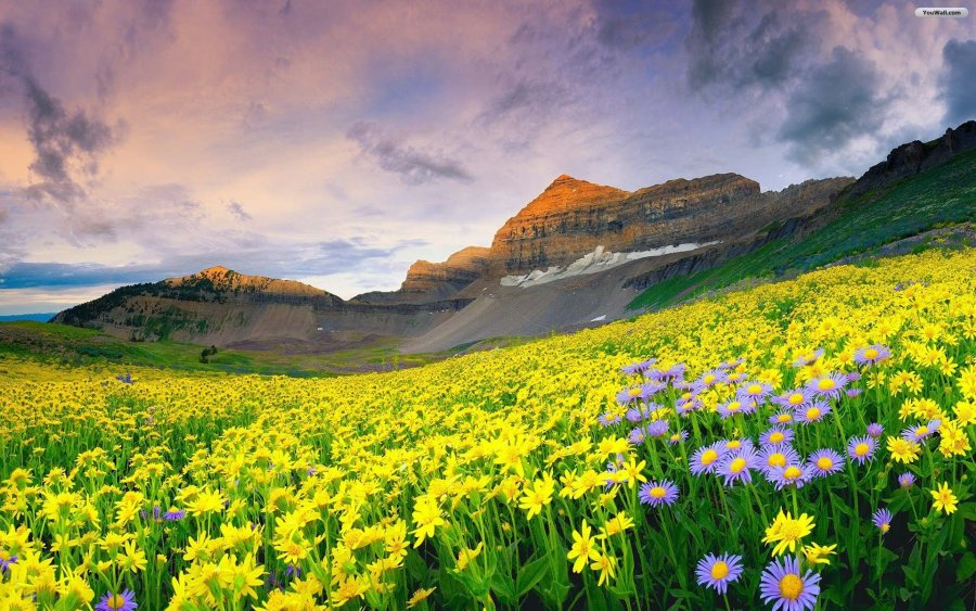 Mountain Flowers 37 Desktop Wallpaper   HdFlowerWallpaper com Mountain Flowers Background