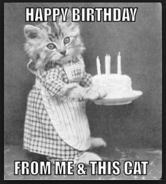 Best Cat Birthday Memes