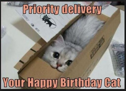 Birthday Cat Funny