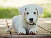 chromebook puppy background wallpapers