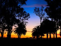 lagoon palm trees landscape sunset 1920x1080