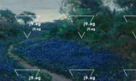 palm trees sun set at beach