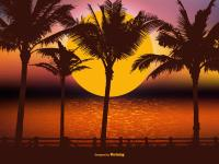 palm trees sun set time lonely feelings