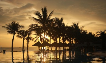 palm trees sea sky sunset 1920x1080