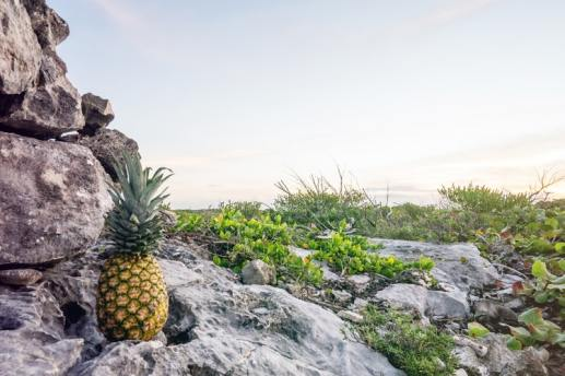 pineapple wallpapers at mountain beautiful background