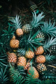 pineapple wallpapers in different colores