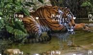 easy front hand mehndi design