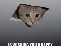 ceiling cat is wishing you a happy birthday