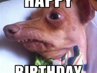 wish you happy birthday by brown dog