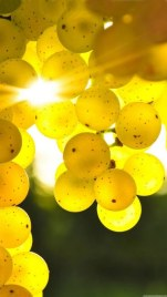 Yellow-Color-HD-Wallpaper-For-iphone_375x667