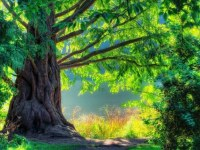 single tree long arms mobile iphone wallpapers_768x432