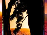 beautiful love between couple near sea wallpaper evening time