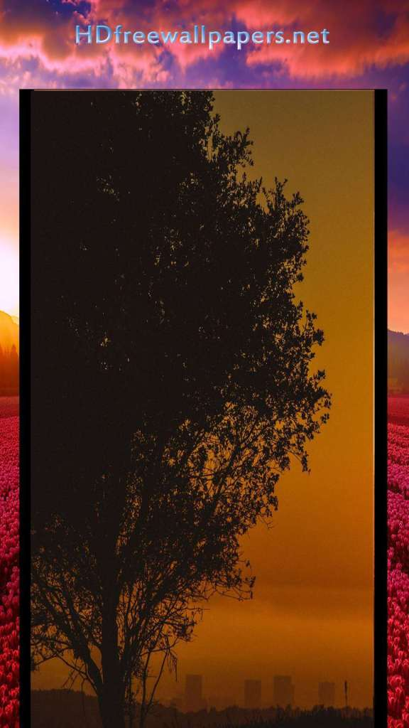 sad tree at evening amazing sean wallpaper for mobile love
