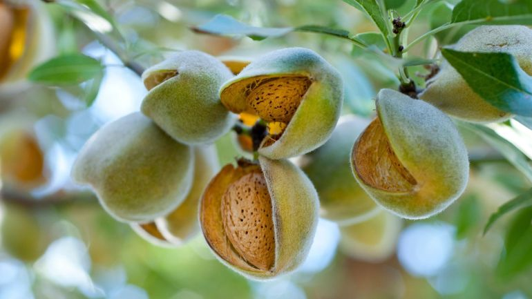 Almond For Skin Beauty.