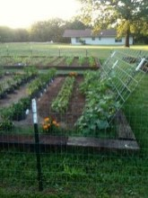 32 Successful Ways To Building DIY Trellis For Veggies And Fruits HomeDesignInspired 23