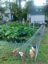 32 Successful Ways To Building DIY Trellis For Veggies And Fruits HomeDesignInspired 30