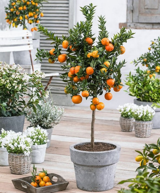 10+ Indoor Plant Care Tips Home Decor 13