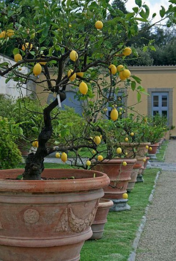 12+ Container Gardening Ideas For Pots And Planting Herbs Home Decor 4
