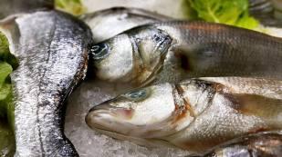 Ekici Restaurant - 0242 2484142 antalya kaleiçi yat limanı mekanlar restaurant bar balık evi (24)