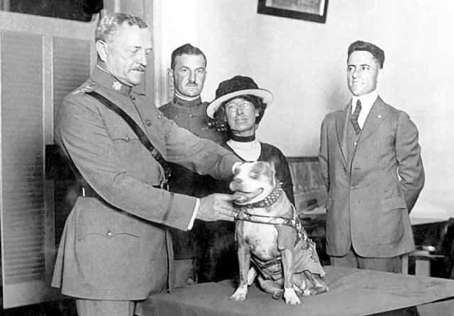 Gen._John_Pershing_awards_Sergeant_Stubby_with_a_medal