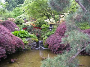 beautiful-japanese-maple-garden-garden-water-fountains-canada
