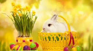 Cute-Easter-Wallpapers-HD-for-2016