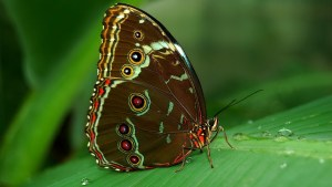 Cute butterfly image for wallpaper