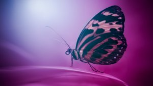 HD Butterfly Wallpaper download