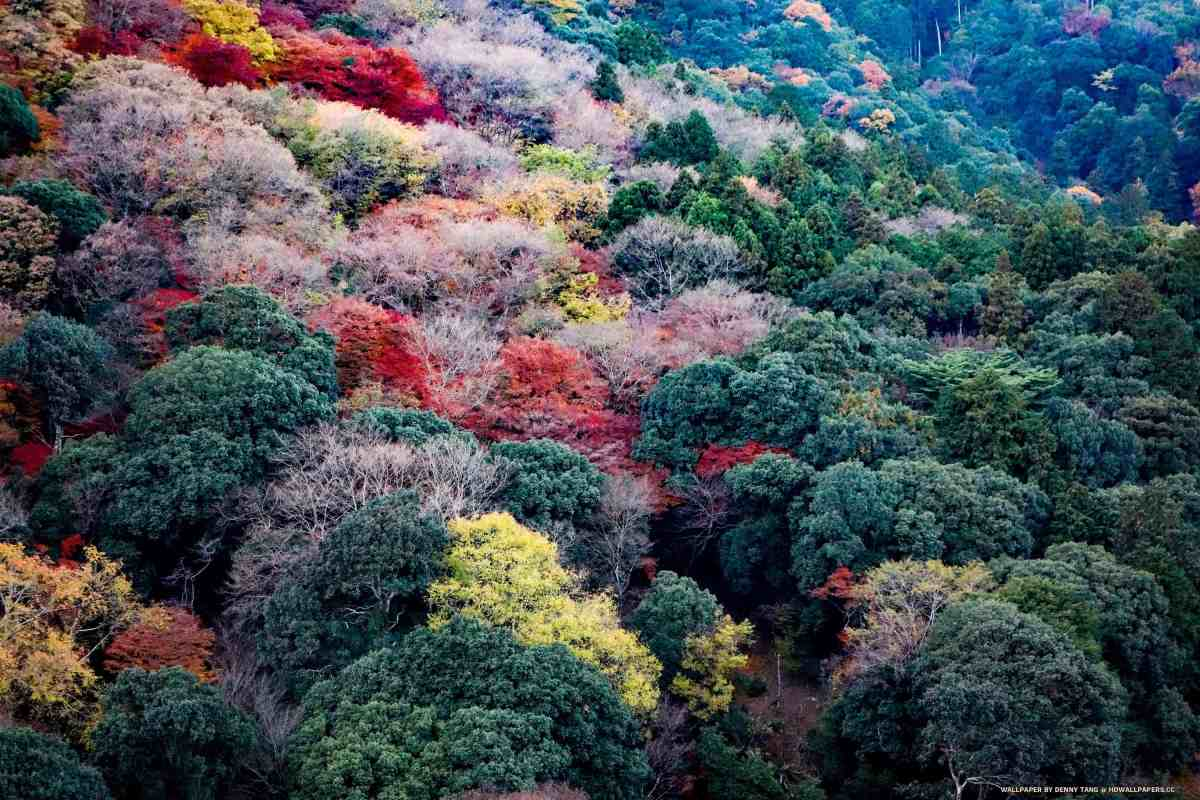 Colorful Arashiyama Mountains in Fall