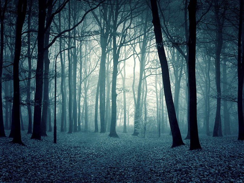 Creepy Forest Wallpaper 19336