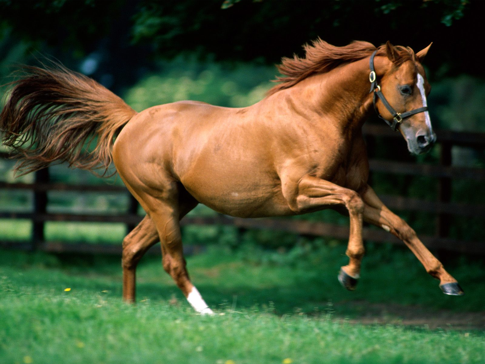 brown horse pictures 32528 1600x1200 px ~ hdwallsource