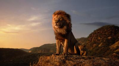 Keyword Lion Hd Wallpapers And Background Images