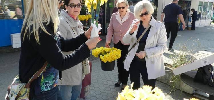 Dan s narcisama i narcisima u Gajnicama
