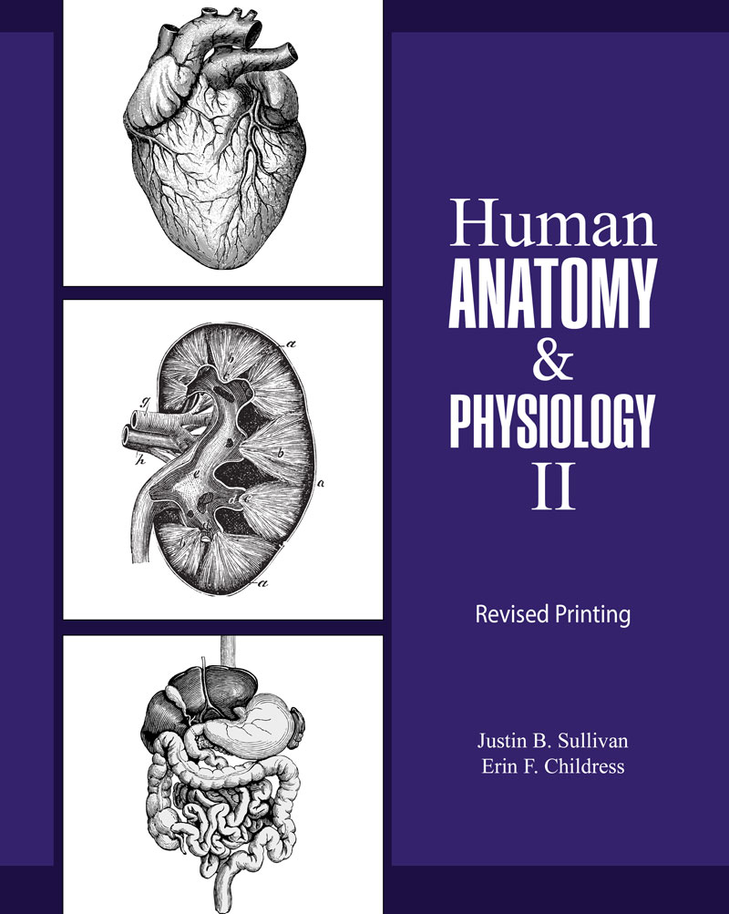 Human Anatomy and Physiology II   Higher Education