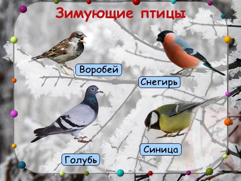Слайд 8: презентация зимующие птицы