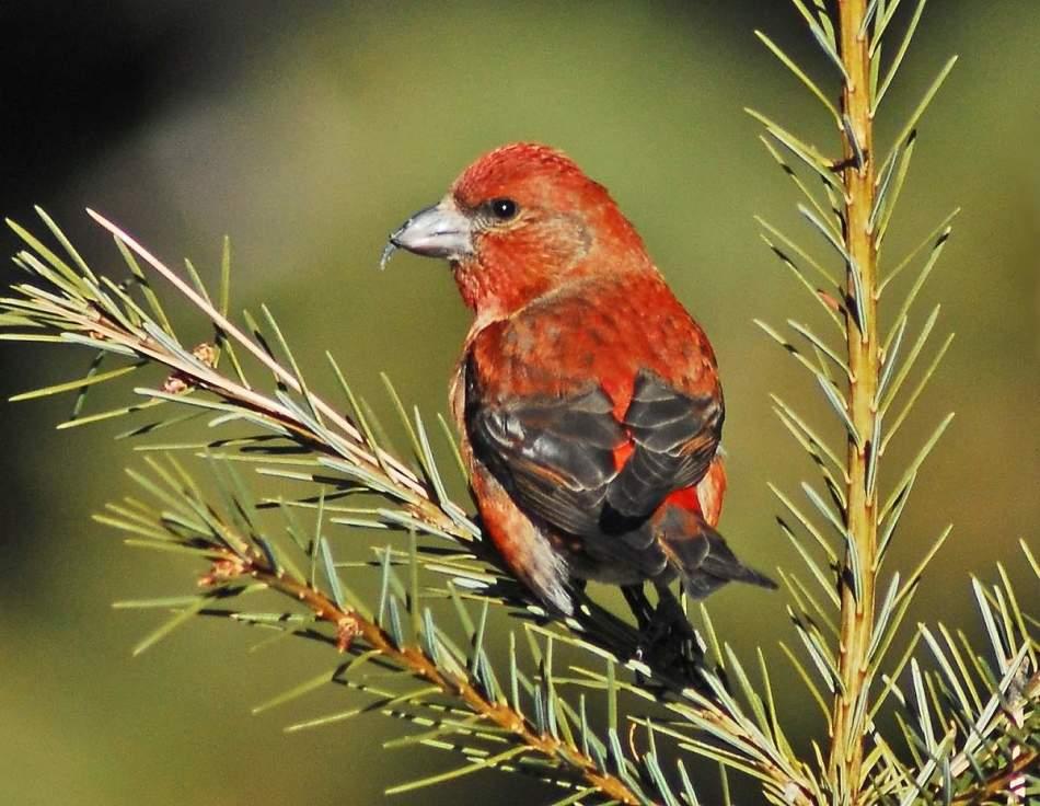птицы наших лесов фото с названиями позиция имеет ссылку