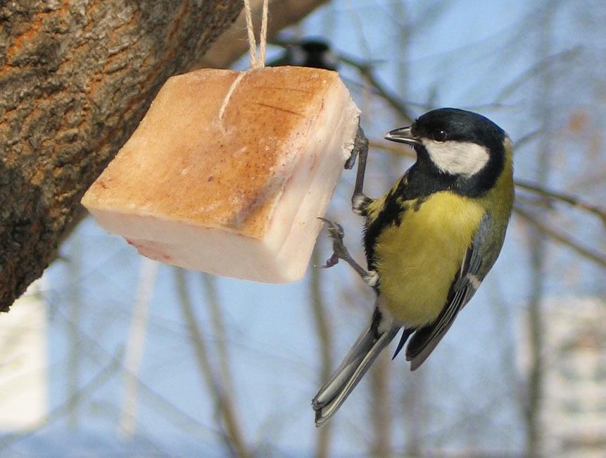 Memberi makan payudara di musim dingin