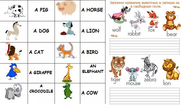 Животные картинки для детей на английском