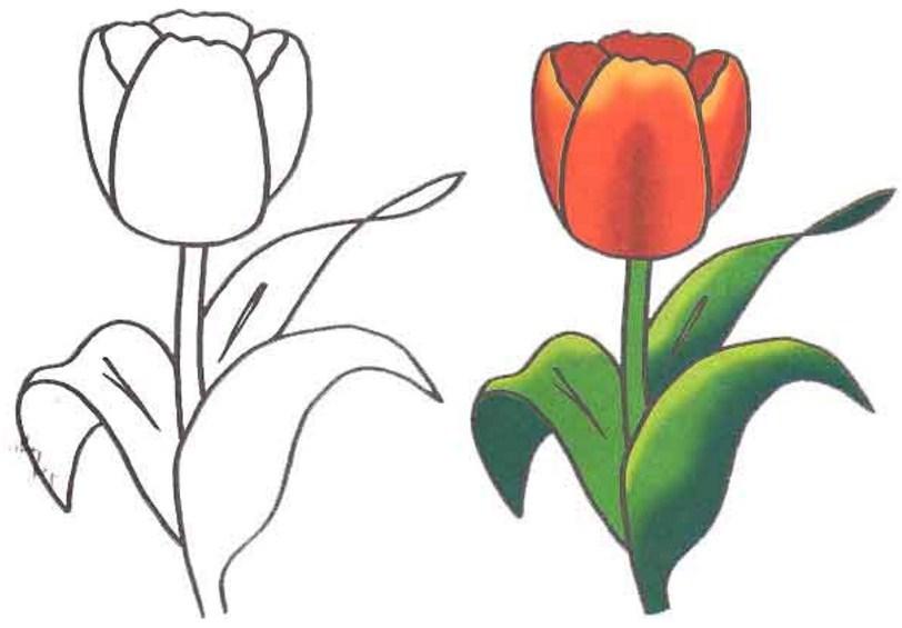 Цветы поэтапное рисование. Как нарисовать клумбу с цветами карандашом поэтапно для начинающих и детей? Как нарисовать клумбу с цветами поэтапно красками