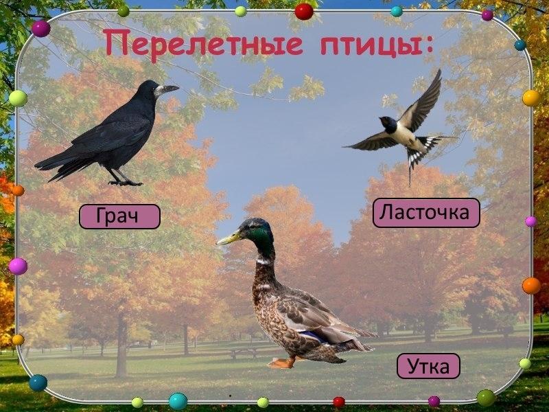 Слайд 2: презентация перелетные птицы