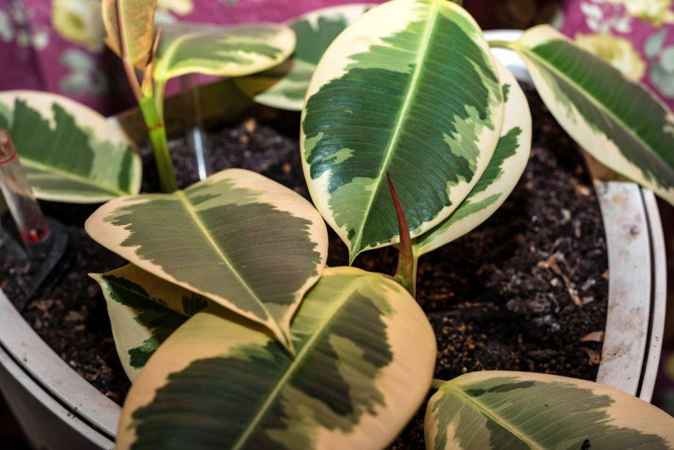 Gezonde plant