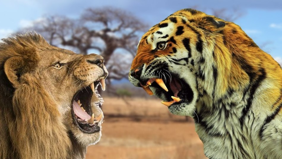 Картинки львы и тигры