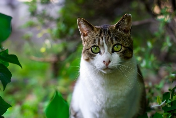 jak rozładować gniw - kot