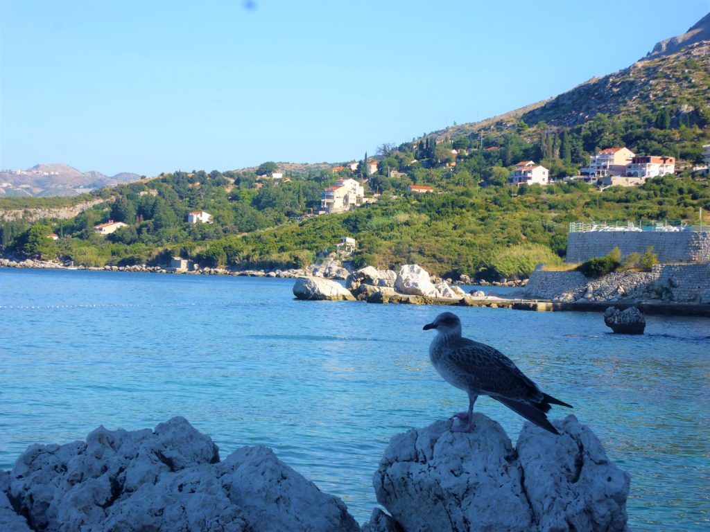 plaża Plat w Chorwacji