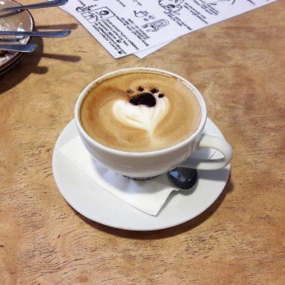 kocia kawiarnia w Gdańsku