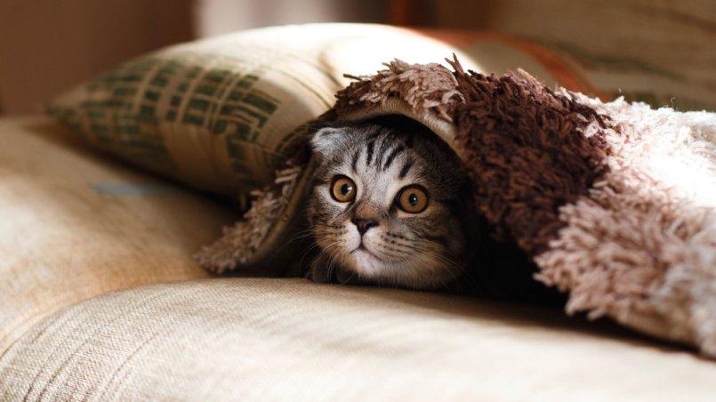 kot - sesja czyli uśmiechnij oczy