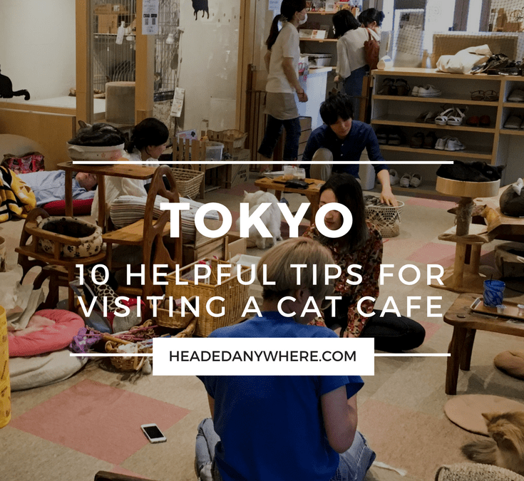 10 Tips for Visiting a Cat Cafe in Tokyo, Japan