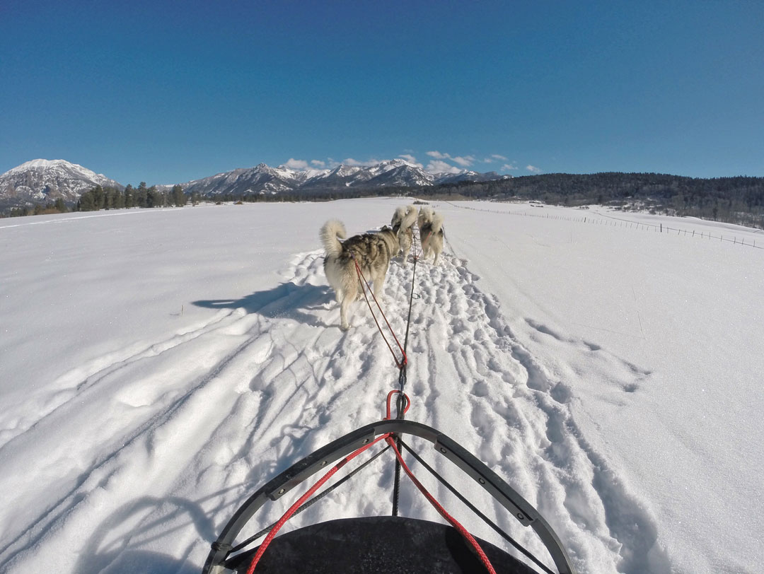 Dog Sledding in Pagosa Springs, Colorado