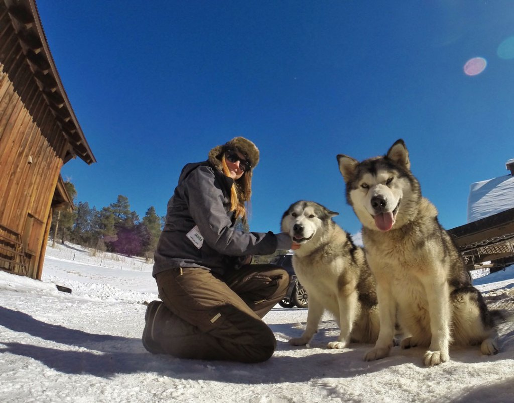 Rewarding the Sled Dogs with pets