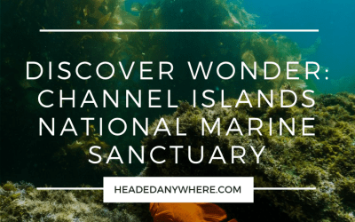 Discover Wonder: Channel Islands National Marine Sanctuary